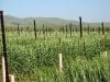 Agriculturel02.jpg