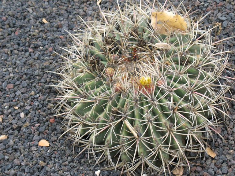 Cactus02.jpg
