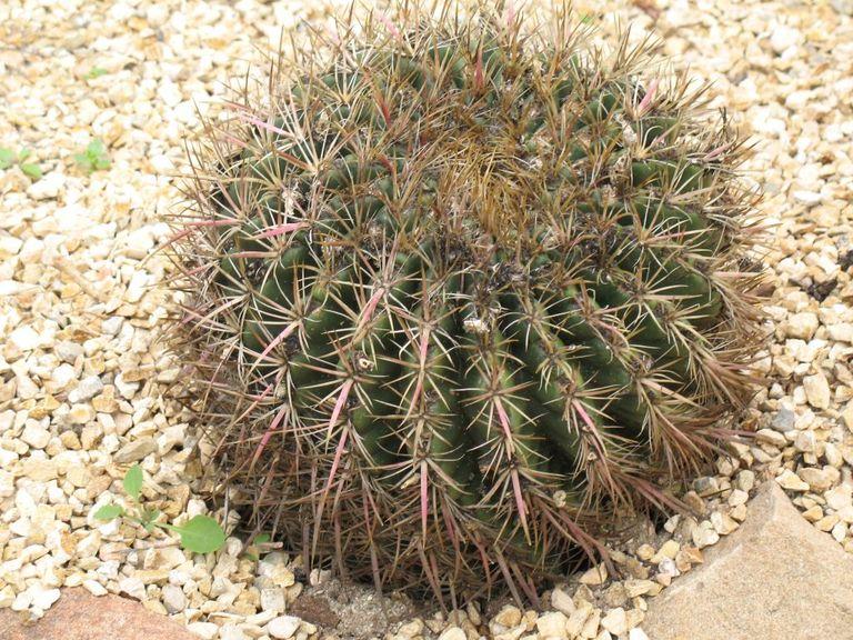 Cactus05.jpg