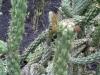 Cactus03.jpg