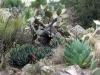 Cactus04.jpg